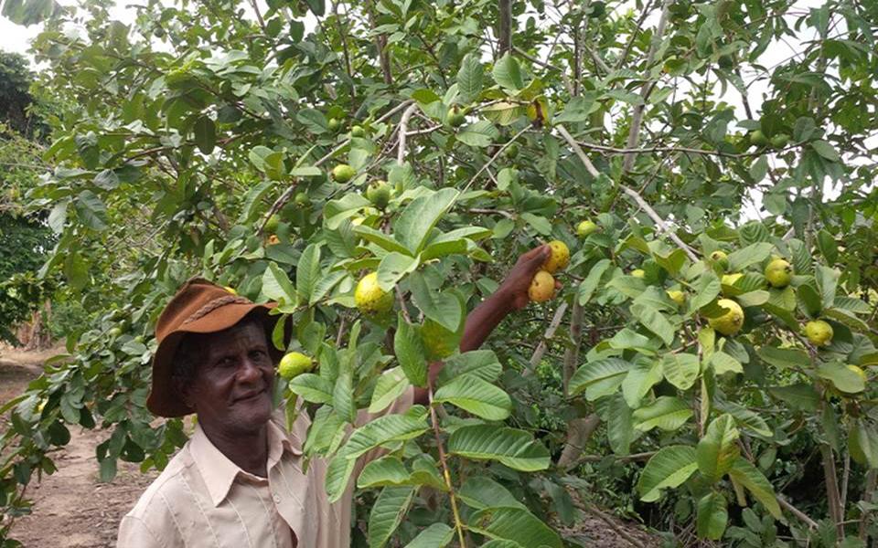 Olivério de Carvalho do Assentamento Primeiro do Sul, do MST, em Campo do Meio, MG, e amostra da infinidade de frutas produzidas no PA Primeiro do Sul.