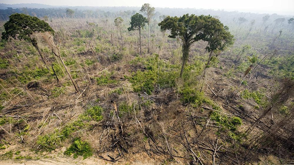 No total, 7.900 km² da Amazônia foram devastados entre julho de 2017 e agosto de 2018.
