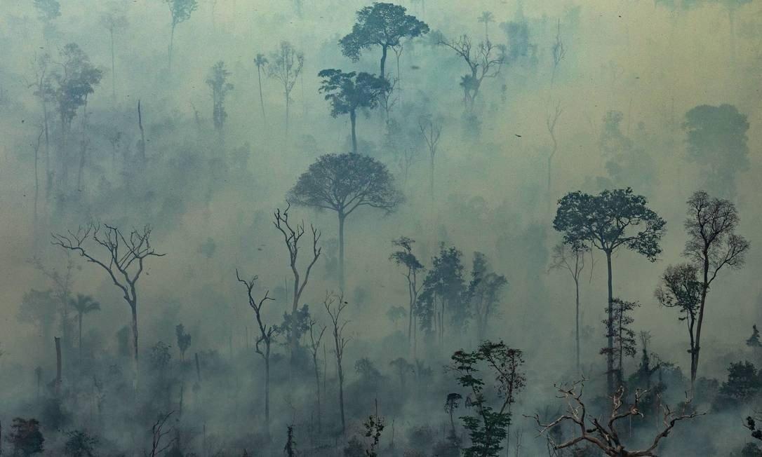 Não existe floresta intocada na Amazônia.