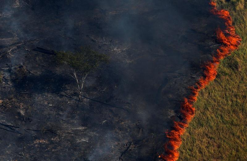 O Brasil queima, não só a Amazônia. Nossa imagem está tosquiada, e também não é só pelo clima, mas por falas, atos, guinadas e pensamentos estranhos