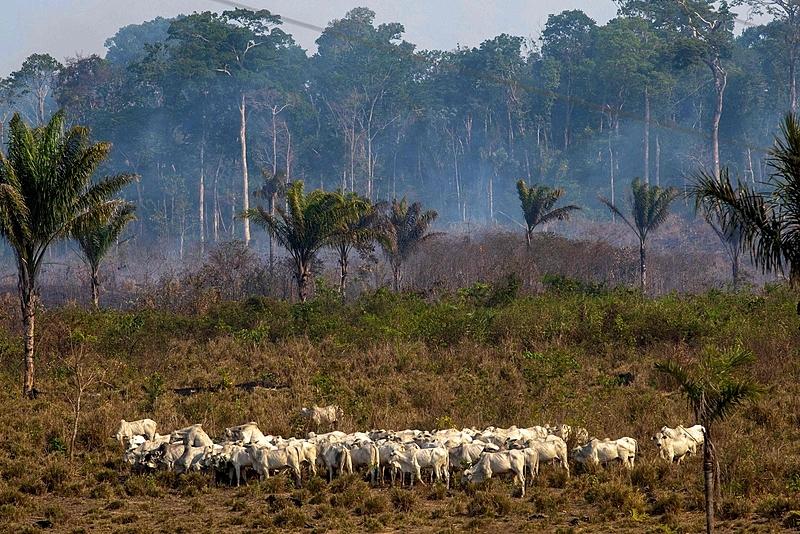 A propriedade da terra constitui o fundamento que sustenta o coronelismo. Proprietário de terras e dono de votos, eis a essência do coronel