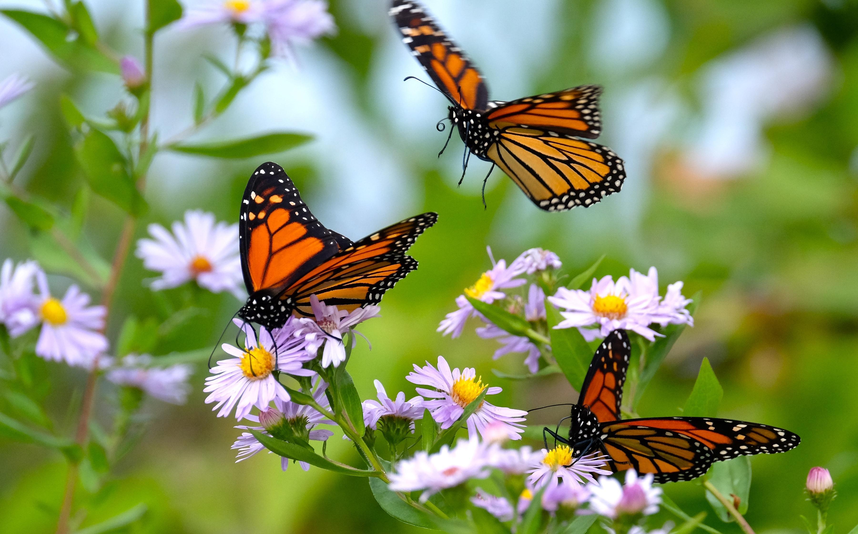 As estratégias da natureza para sinalizar aos animais a presença de néctar e pólen.