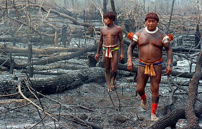 'Amazoniza-te', uma campanha dos povos indígenas em defesa da mata