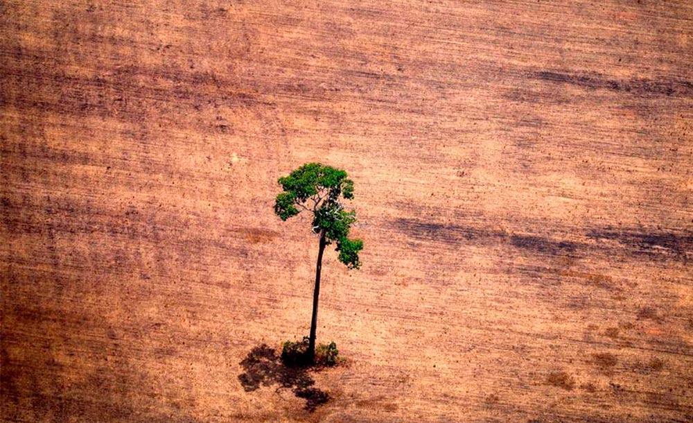 A principal consequência do avanço das savanas na floresta amazônica é o clima mais seco e incêndios mais frequentes.