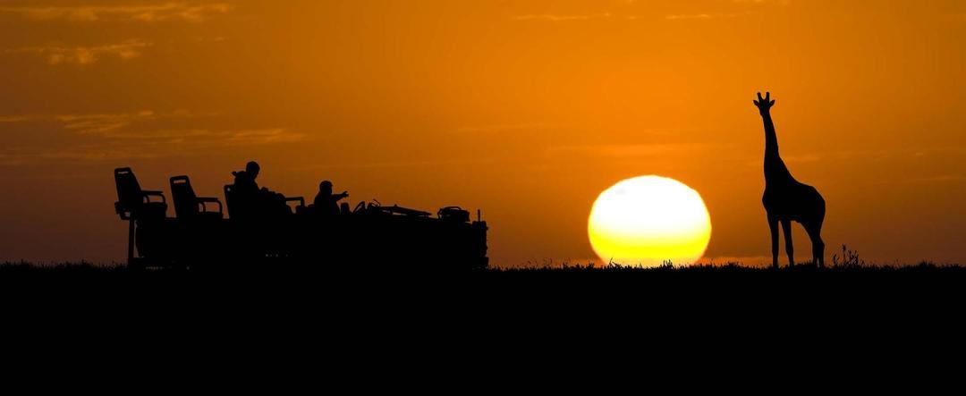 Girafa ao por do sol, África