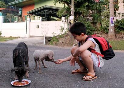Animal resgatado deverá receber tratos, ser devolvido ou adotado.