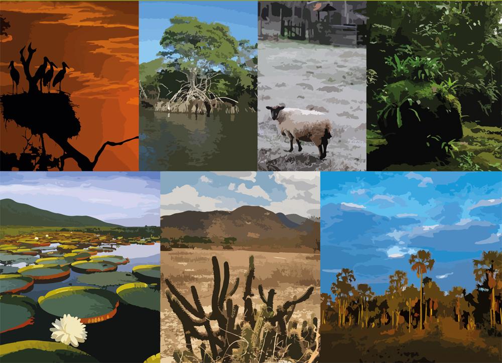 Disponibilizada a versão digital de livro sobre os biomas brasileiros, tema da CF 2017.