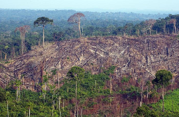 Floresta Nacional do Jamanxim já era alvo de desmatamento ilegal (foto). Com a MP, está tudo liberado.