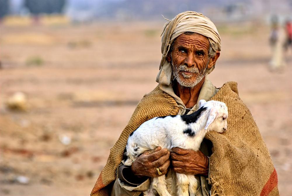 Jesus continua dizendo que ele é a porta das ovelhas e através dela as ovelhas têm liberdade para entrar e sair e encontrarem pastagens.