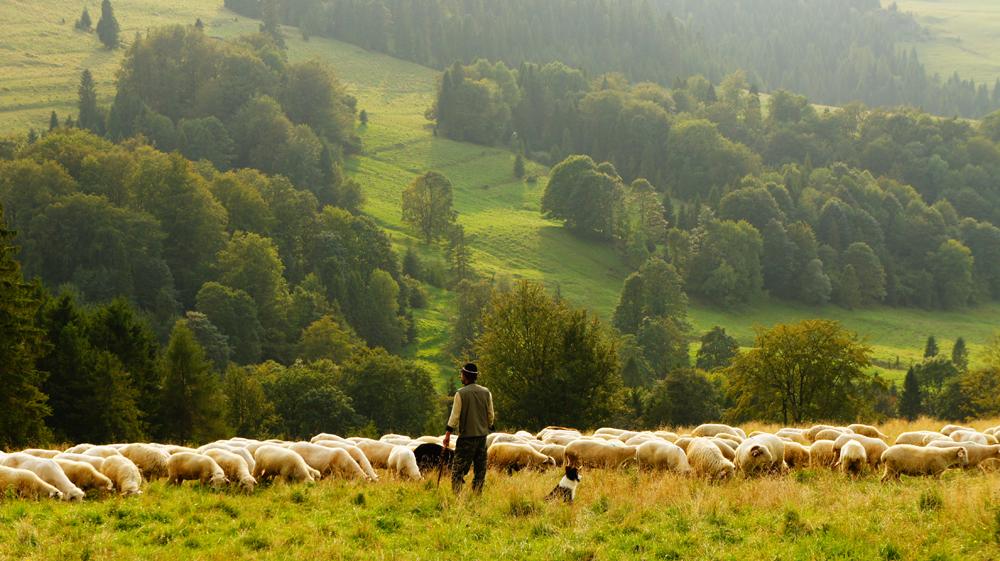 Cristo, Bom Pastor, tornou-se a porta para a salvação da humanidade, porque ofereceu a vida pelas suas ovelhas.