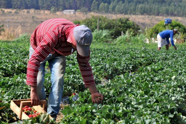 A agroecologia ganha importância no debate sobre o que fazer para superar o modelo da 'revolução verde'.