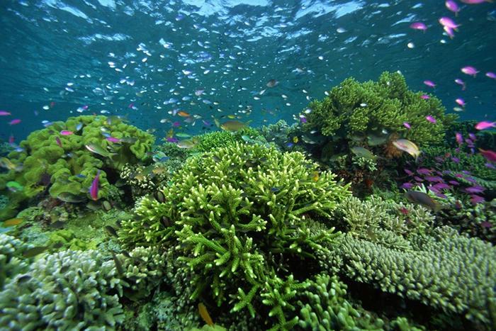 Poluentes químicos jogados na natureza possuem estrogênio, que provoca a feminilização dos peixes.