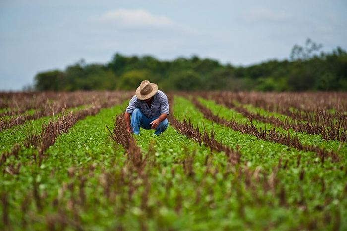 Segundo a WWF, a cadeia de produção de alimentos usa 34% do solo e 69% da água disponível nos rios.