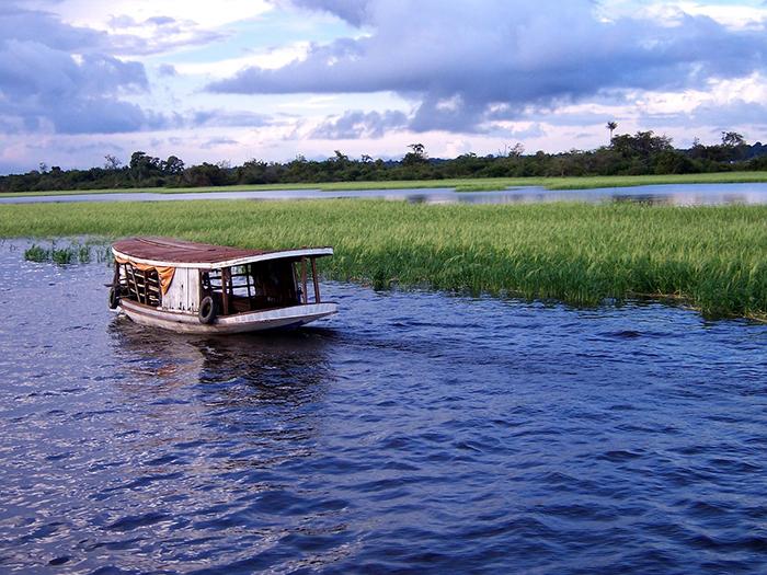 Em torno de 60% da selva amazônica está situada no território brasileiro.