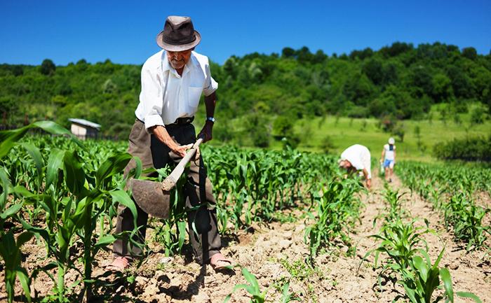 Segundo dados da Organização das Nações Unidas, cerca de 1,6 bilhão de pessoas dependem diretamente das florestas para obtenção de alimentos, combustível, moradia e renda.