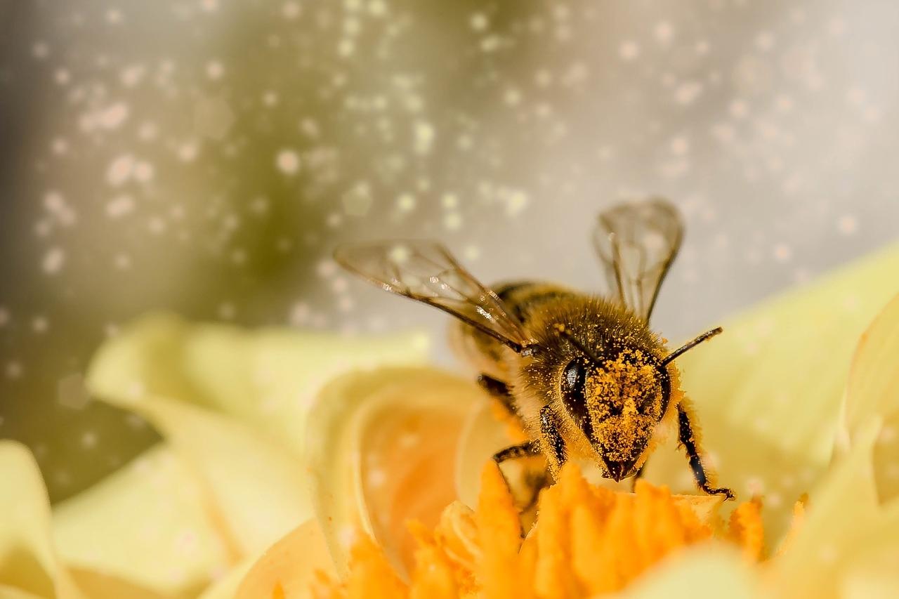 Cada espécie de abelha é capaz de coletar substâncias de plantas e formar diversos tipos de própolis, que são dependentes do ambiente em que vivem e das fontes vegetais que esses insetos possuem para coletar.