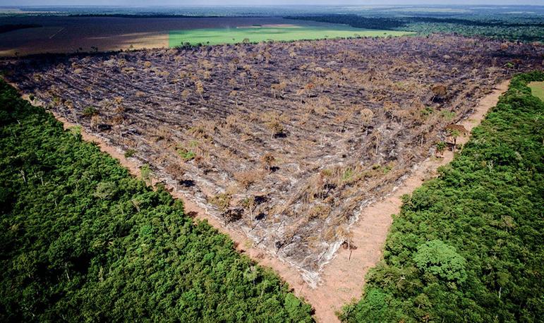 Entre agosto de 2017 e julho de 2018, o desmatamento na Amazônia aumentou 13,8%.
