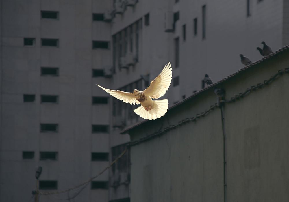 Celebrar o dia mundial da paz no Brasil é em última análise ser uma pessoa revolucionária que tem o amor em seu horizonte para que a paz tenha a palavra definitiva e não as violências.