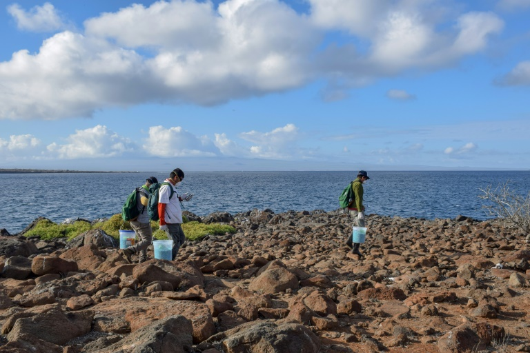 Foto divulgada pelo Parque Nacional de Galápagos (PNG) para ilustrar o programa de erradicação de ratos no arquipélago.