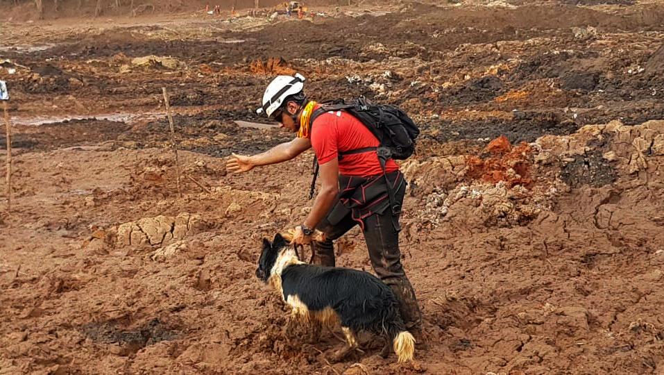 Binômio - nome dado a cada dupla formada por bombeiro e animal - em trabalho de busca.
