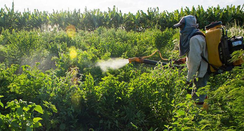 Funcionário aplica agrotóxico em pequena fazenda em Limoeiro do Norte, no Ceará em 16 de janeiro. (Reuters/ Davi Pinheiro)