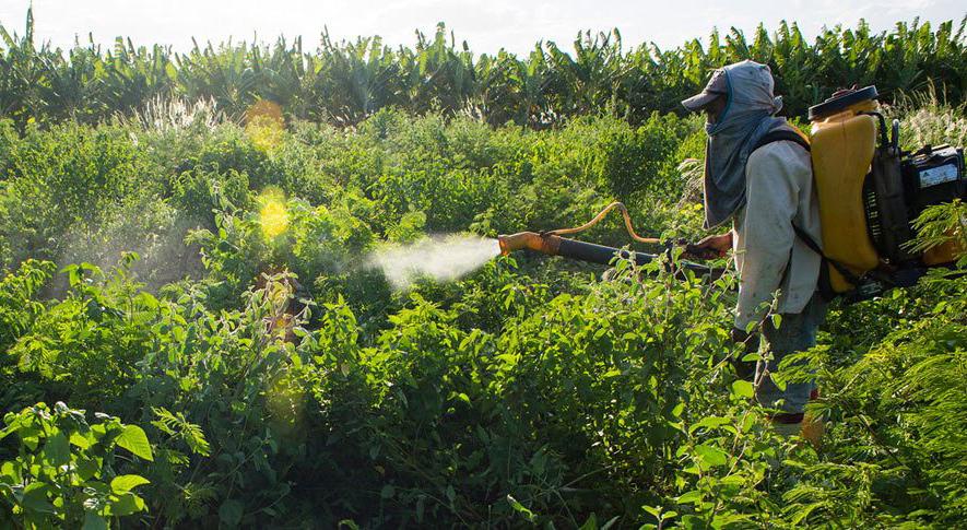 Funcionário aplica agrotóxico em pequena fazenda em Limoeiro do Norte, no Ceará em 16 de janeiro.