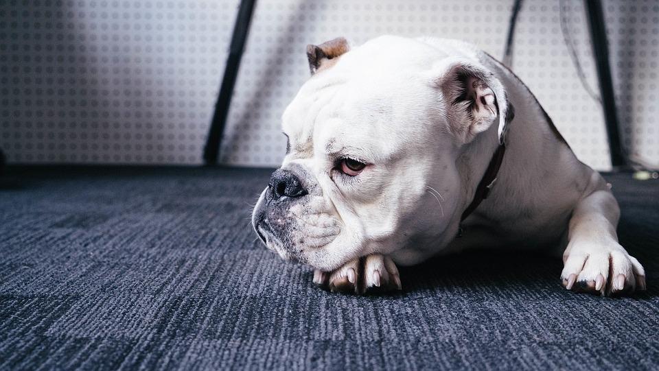 Mal comia e, quando tomado pelo enfado, deitava-se na cama do amigo, desolado. O cão era só solidão.