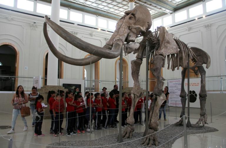 Um grupo de alunos contempla o esqueleto de um mamute no Museu da Revolução e Fronteira, em Ciudad Juárez (México), em 8 de maio de 2018