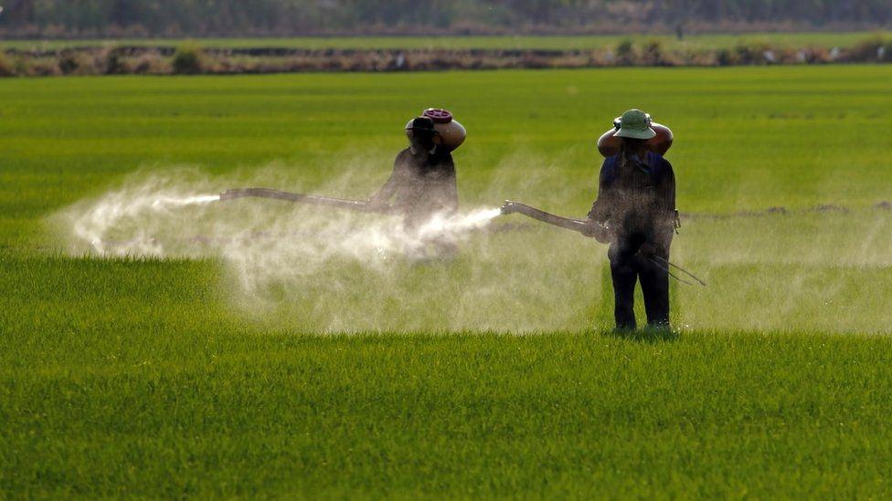Fazenda recebendo tratamento com agrotóxicos.