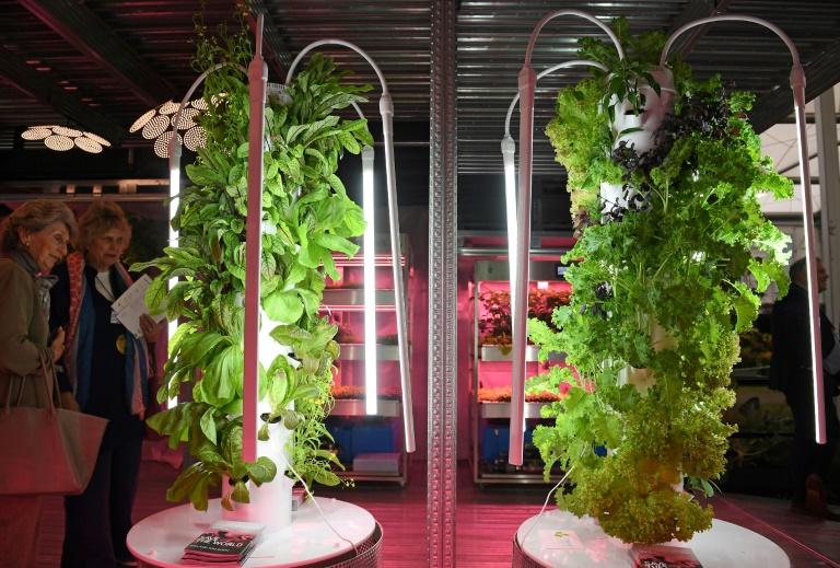 Plantas criadas com iluminação artificial no Chelsea Flower Show de Londres, em 20 de maio de 2019.