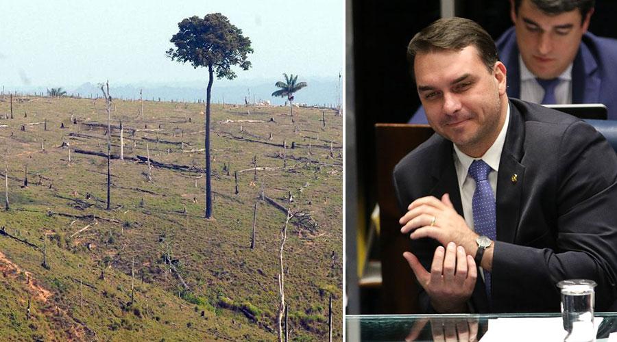 Código Florestal prevê o mínimo de 20% de mata nativa, mas PL quer acabar com obrigatoriedade.