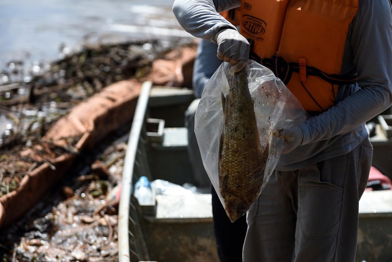 Peixe do rio Paraopeba morto pela lama da Vale que tornou água tóxica