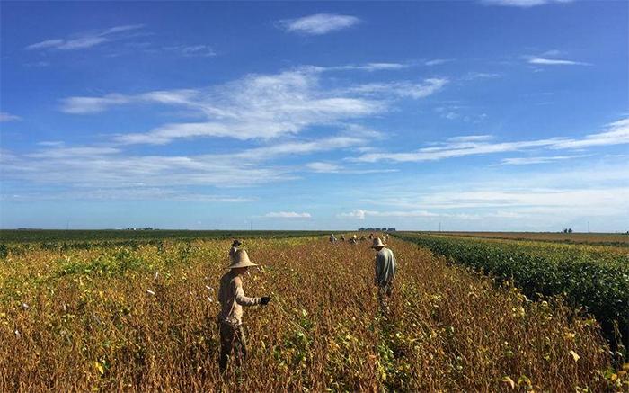 O departamento americano de Agricultura avaliou que a produção do grão no Brasil chegará a 123 milhões de toneladas em 2020, em comparação com as 117 milhões deste ano.