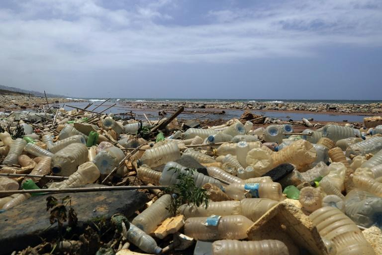 Microplásticos tendem a absorver substâncias químicas nocivas e se acumulam dentro de peixes, pássaros e outros animais.