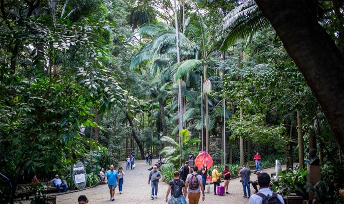 Uma empresa será contratada para fazer o corte de 700 palmeiras grandes e plantio de novas mudas.
