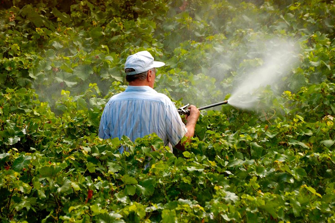 O novo herbicida incluído na mudança é o Florpirauxifen-benzil, que teria modo de ação inédito no País.