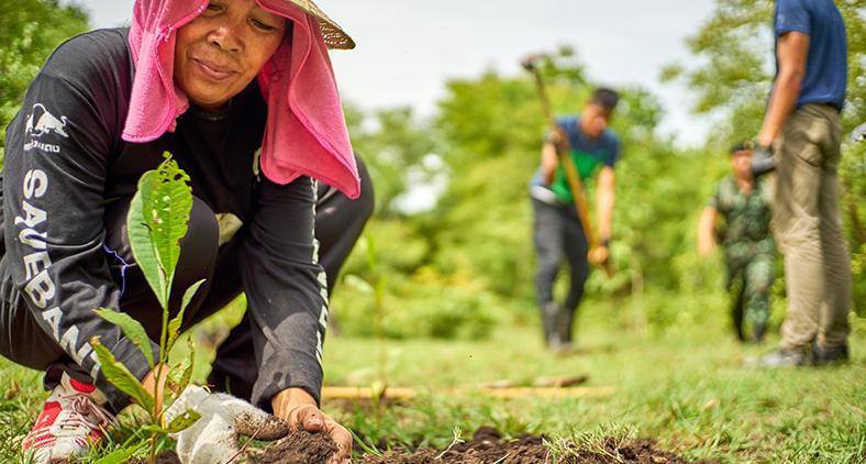 O ser humano foi constituído como uma espécie de jardineiro em Éden, símbolo do cuidado para com o mundo que deve nutrir. (Dmitry Dreyer/ Unsplash)