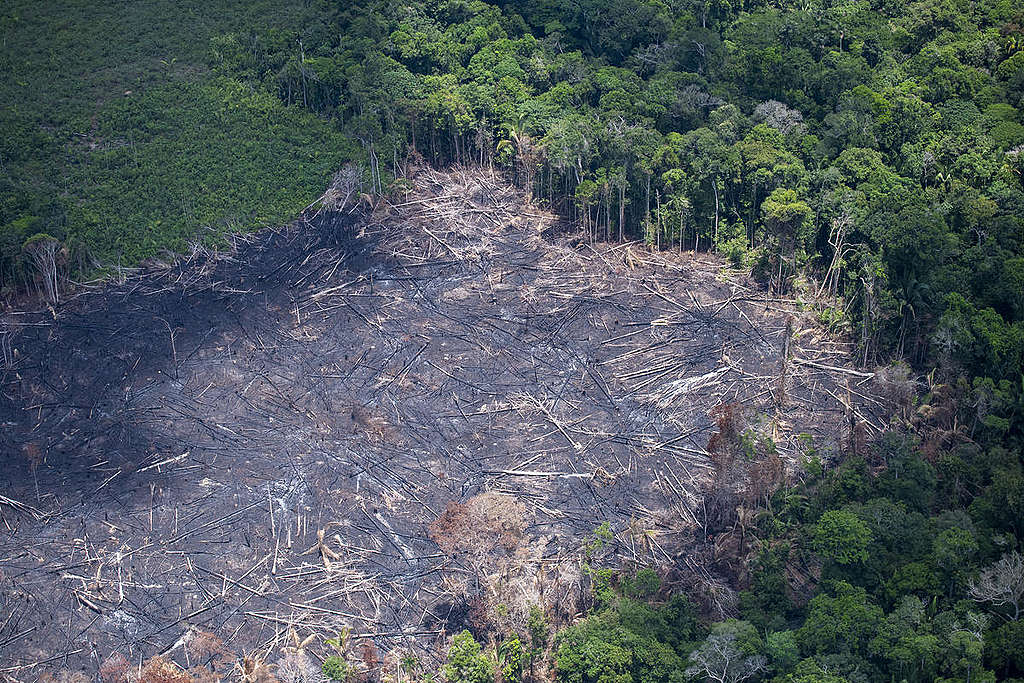 Segundo o site, os projetos apoiados pelo Fundo Amazônia já contribuíram para proteger 45 milhões de hectares na região, impactando 162 mil pessoas com atividades produtivas sustentáveis.