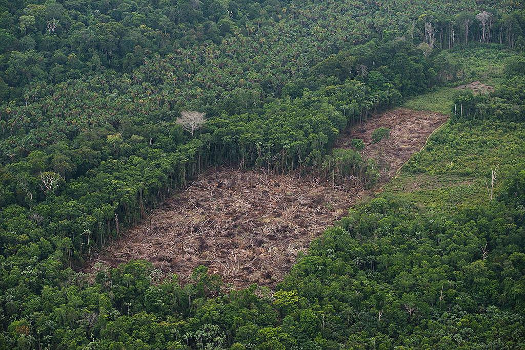 O ministro chegou a dizer que os quase 8 mil km² de desmatamento ocorridos na Amazônia entre 2017 e 2018 eram insignificantes e beiravam o zero.