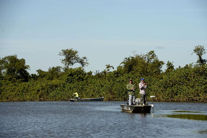 Apesar da recuperação, atualmente restam apenas 23% das áreas de manguezal que foram encontradas pelos colonizadores quando chegaram ao Rio de Janeiro.