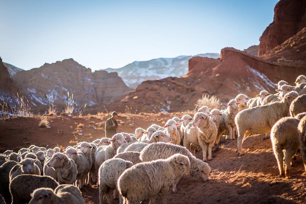 A alegoria do pastor fala de 'escuta', 'conhecimento', 'seguimento' e 'vida eterna', que é a chave do tempo pascal.