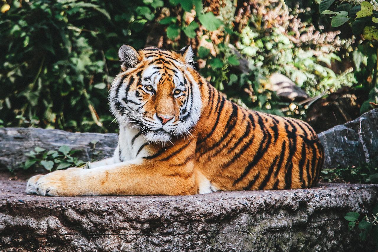 O estudo demonstra que a defaunação é praticamente negligenciada nas negociações climáticas internacionais e na governança florestal.