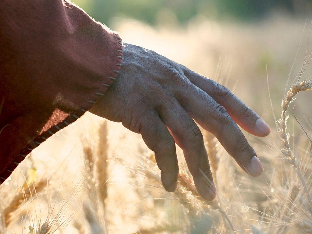 Depois de vinte séculos, que espírito reina entre os cristãos?