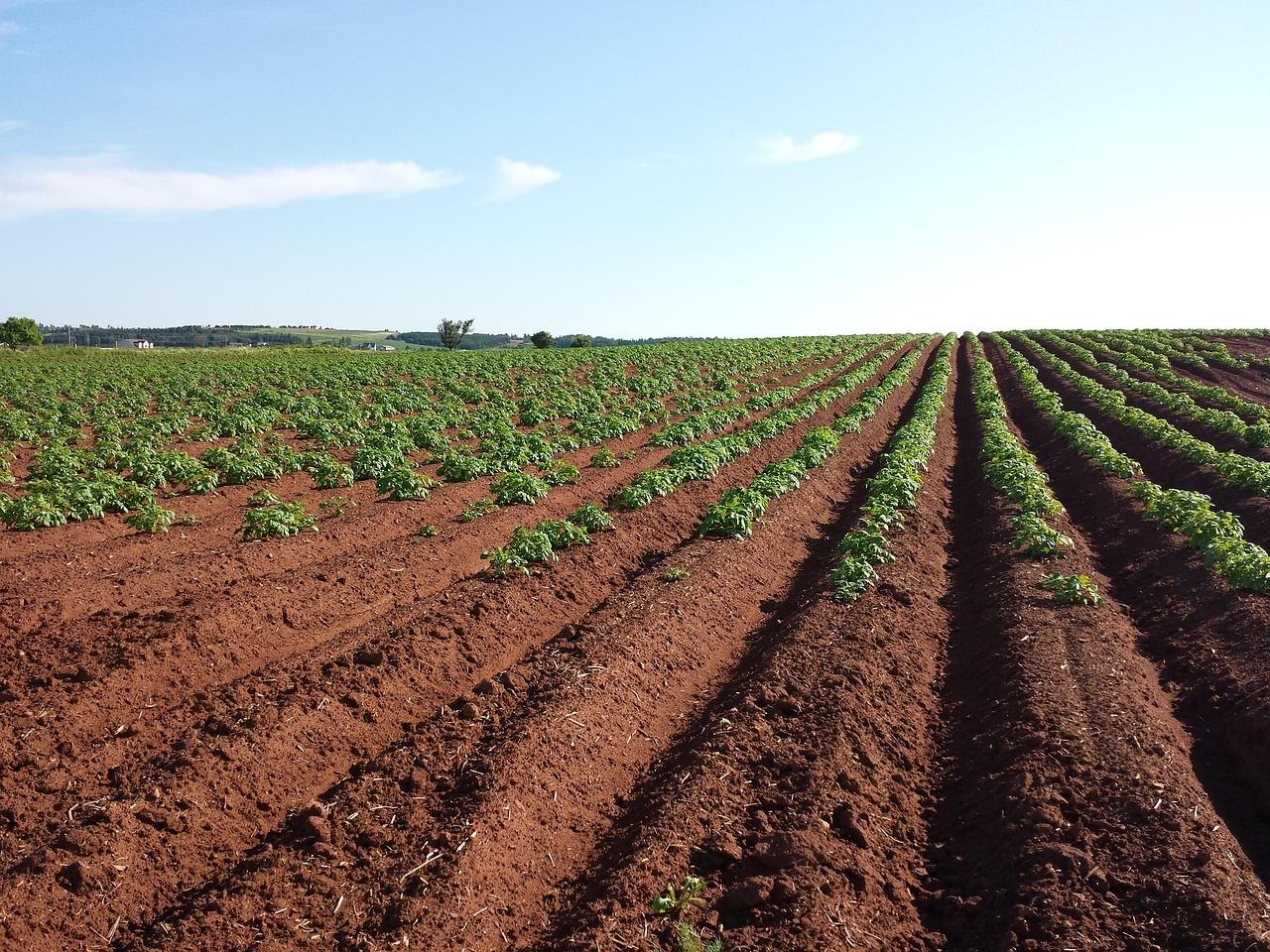 Aprender a lavrar territórios, terrenos, terras livres de opressão, com sementes da inteligência extraídas dos princípios basilares de civilização.
