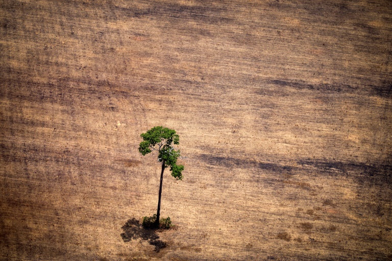 Árrvore no meio de zona desmatada na Amazônia, em outubro de 2014.
