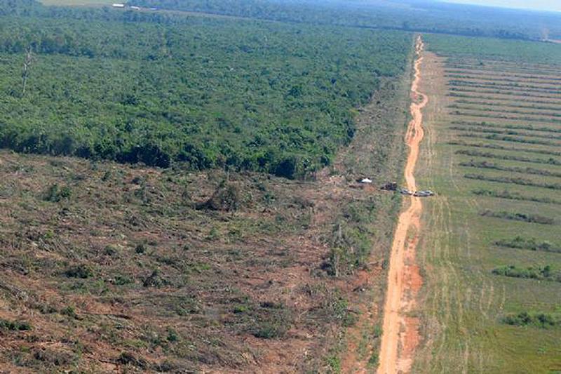 Mato Grosso foi o terceiro estado que mais desmatou o bioma, foram 998 km², respondendo por 15% de todo o Cerrado perdido no Brasil em um ano.