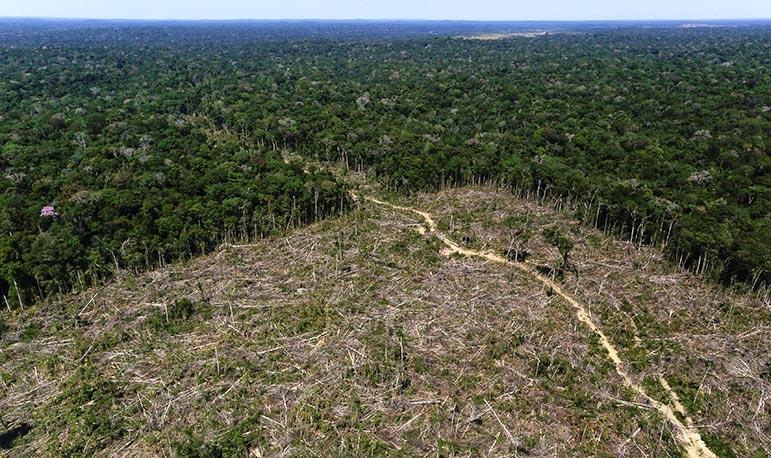 Em julho, uma área de floresta com o dobro do tamanho de Berlim teria desaparecido no Brasil. A Alemanha agora está congelando subsídios.