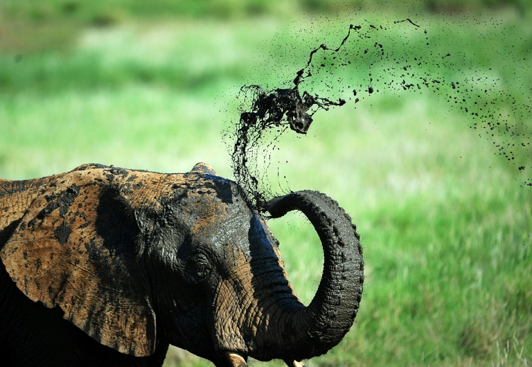 Elefante toma banho de lama na reserva do Monte Quênia, em 21 de maio de 2015.