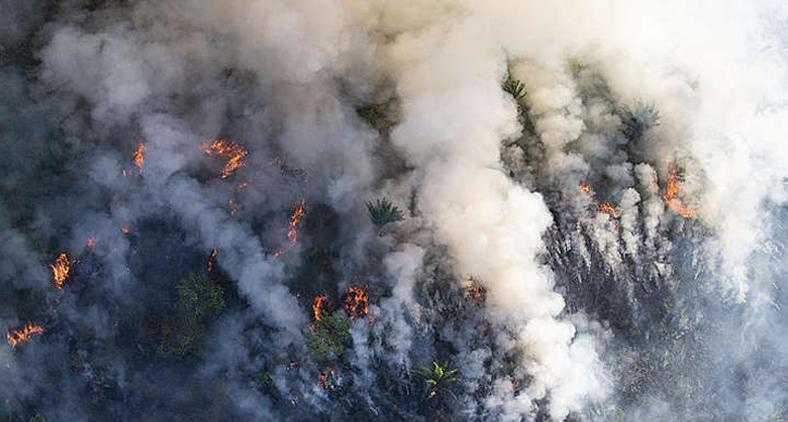 Os retrocessos nas políticas ambientais de nosso país são extremamente graves (Daniel Beltra / Greenpeace)