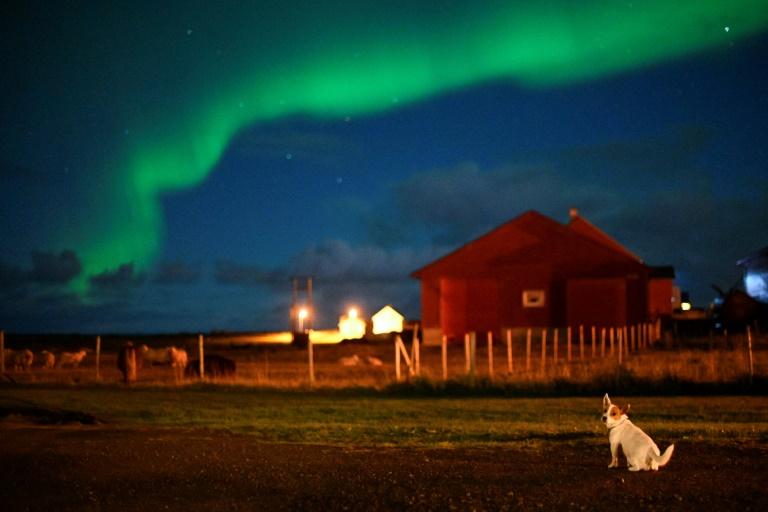 Cão fotografado sob a aurora boreal, em 30 de setembro de 2018, em Unstad, no norte da Noruega.